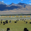 Enjoyable The Tibet Train Tour Following With Our Tour Operator