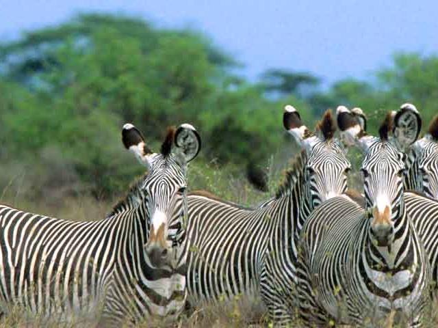 Meru National Park Package Photos