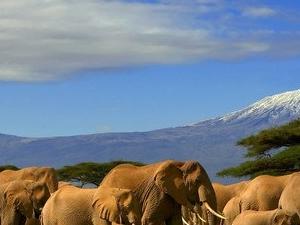 Getaway to Amboseli Serena Lodge Fotos