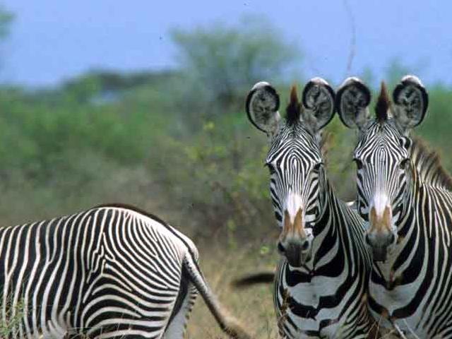 Meru National Park Photos