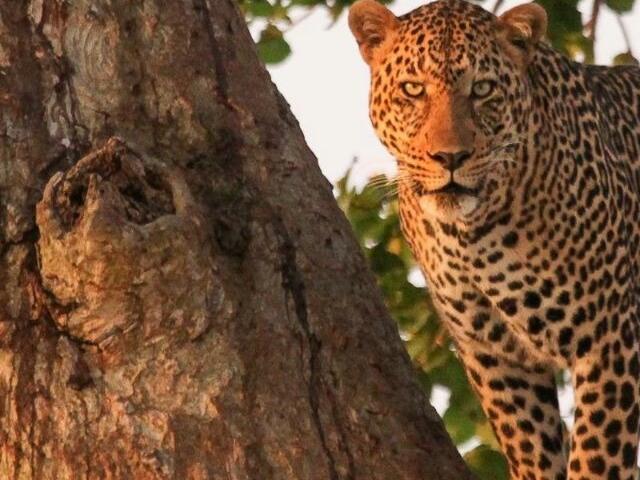 Flying Trip to Kenya's Best Wild Areas Photos