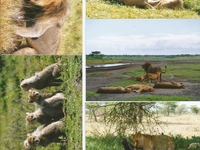 Wonders Serengeti Safaris