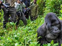 Bwindi Gorilla Trekking Safari in Uganda
