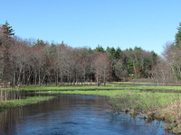 Salmon Brook
