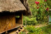 3-Day Iquitos Amazon Jungle Adventure at Ceiba Tops Luxury Lodge Photos