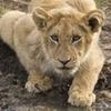 3-Day Kruger Park Wildlife Safari