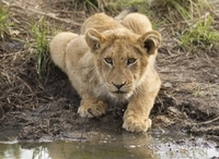 3-Day Kruger Park Wildlife Safari