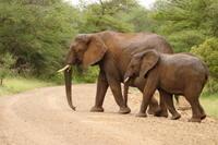 4-Day Kruger National Park Safari Adventure  Photos