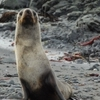 8-Day Antarctica Cruise with Round-Trip Flight from Punta Arenas