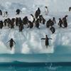 9-Day Antarctica Tour from Punta Arenas: Drake Passage, South Shetland and Antarctic Peninsula