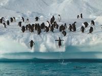 9-Day Antarctica Tour from Punta Arenas: Drake Passage, South Shetland and Antarctic Peninsula Photos