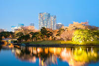Cherry Blossoms Evening Cruise on Sumida River in Tokyo Photos
