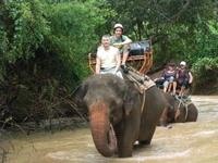 Elephant Trekking in Pattaya Photos
