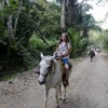 Horseback-Riding Tour from Paraty