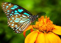Kuala Lumpur Nature Tour: Orchid Garden, Butterfly Park and Bird Park Photos