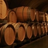 Mendoza Wine Tour with Optional Lunch