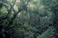 Rio de Janeiro Botanical Garden and Tijuca Rainforest Eco-Tour Photos