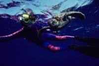 Turtle Reef Kayak Tour Photos