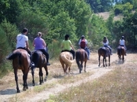 Tuscan Hills Horseback Riding Tour from Siena Photos