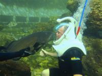 Underwater Helmet-Diving Experience at the Miami Seaquarium Photos