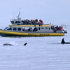 Victoria Shore Excursion: Whale-Watching Cruise and Butchart Gardens Admission