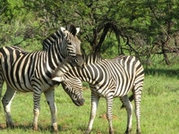 Pilanesberg Nature Reserve Safari and Sun City Day Trip