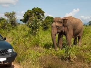 Udawalawa National Park - 1Day Excursion