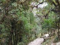 Trail Nayapul para Ghorepani
