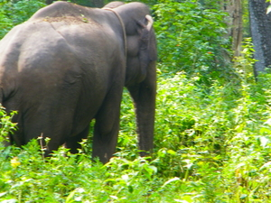Wildlife & Tea Tasting Trail To Nilgiris
