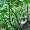 Limontitla Botanical Garden