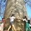 Baobab And Tsingy - Madagascar
