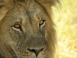 Learner Safari Guide -Ranger Course in Victoria Falls, Zimbabwe. Photos
