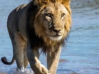 13 Days In Zambia's Animal Kingdom