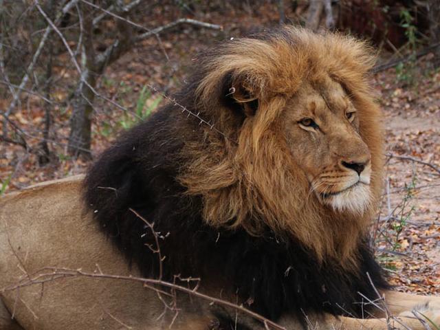 Namibia - Botswana - Victoria Falls Tour Photos