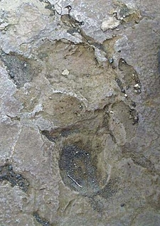1790 Footprints Kau Desert