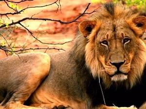 Buffalo Ridge Safari Lodge, Madikwe Game Reserve