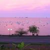 Rose Sea In Mamoudzou