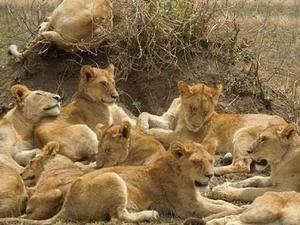 3 Days safari Ngorongoro, Tarangire and Lake Manyara Fotos