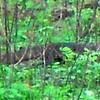 Birds In Karera Sanctuary