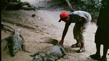 Visitors Are Able To Touch The Crocodiles