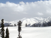 Kashmir Honymoon Tour