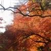 Panorama Of Fall Colors