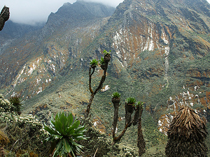 Mountain Rwenzori Hike Photos