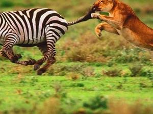 North - South Tanzania Safari Photos