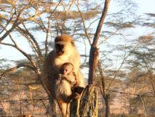 3rd Post Monkeys