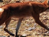 Wildlife and Game Viewing Safari