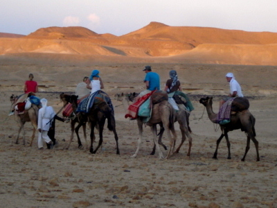 Experience Sinai With Bedouin, Enjoy The Silence Of The Desert !Join Us In Sinai Desert Safari. 'Sinai Bedouin Safari' Offers Trekking And Camel Trips Around Desert, Horse Rides, 4x4 Jeep Safari, Backpacking, Rock Climbing – All With Our Best Guides. Welc