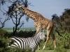 Safari Profile Picture 3