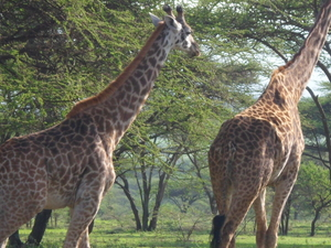 Lodge Safari to Tarangire, Manyara and Ngorongoro Photos