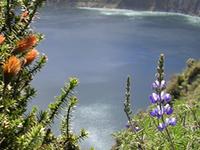 Wildflowers Laguna Quilotoa